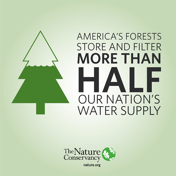 America's Forest Store A Lot Of Water