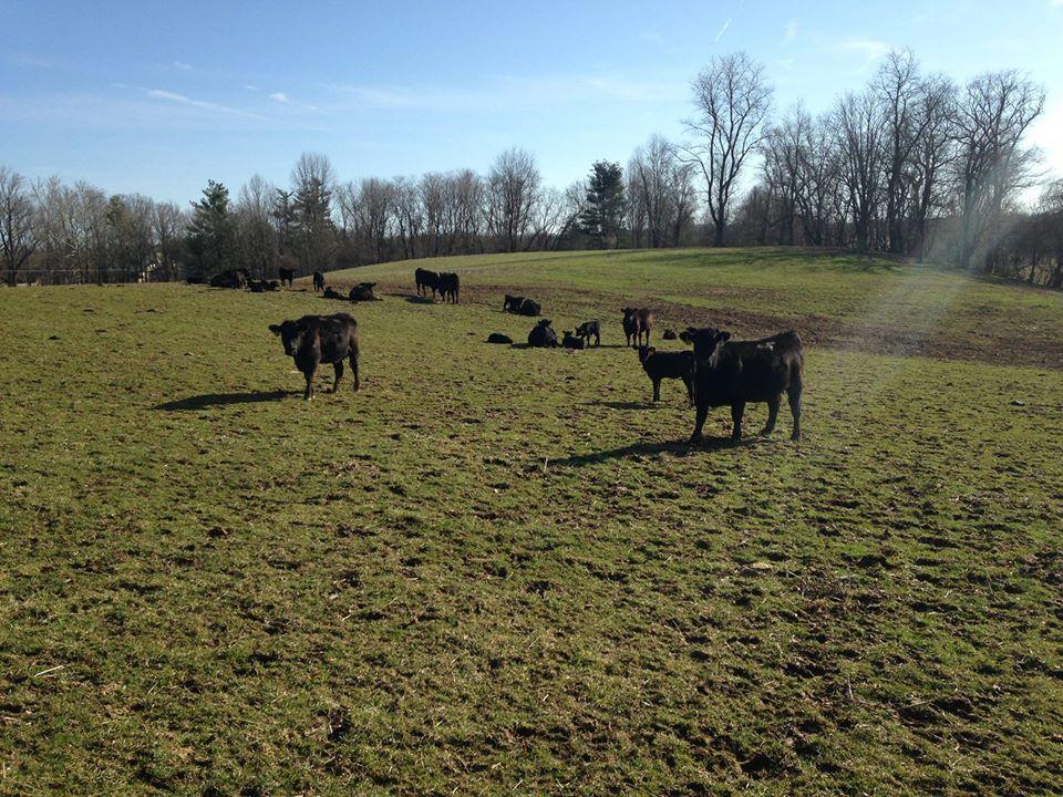 Roseda Farm Field